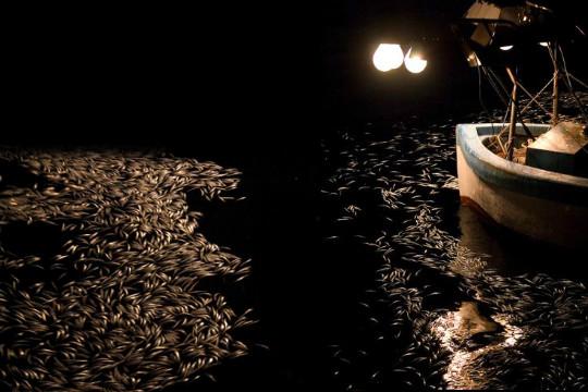 تنامي ظاهرة الصيد بالأضواء الكاشفة بمياه العرائش يهدد الثروة السمكية  بالمنطقة - العرائش نيوز - Larachenews